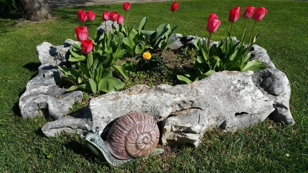 Червени лалета в каменно сандъче и каменен охлюв